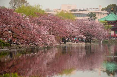 Tokyo - Parco Ueno